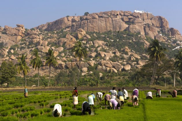Rice paddies at the feet of Hanuman Temple in Hampi